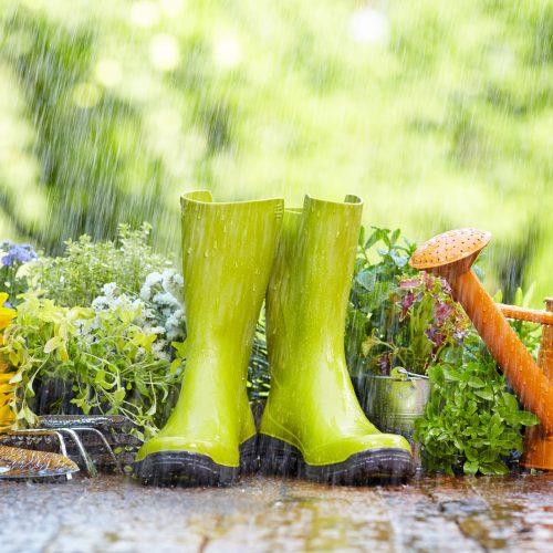 Printemps jardinage Paris