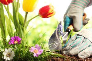 Calendrier du jardinage : quand et comment entretenir son extérieur ?