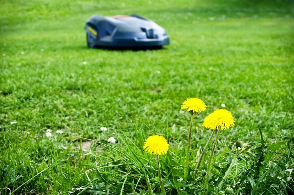 Aménager son extérieur, entretien jardin et installation robot tondeuse