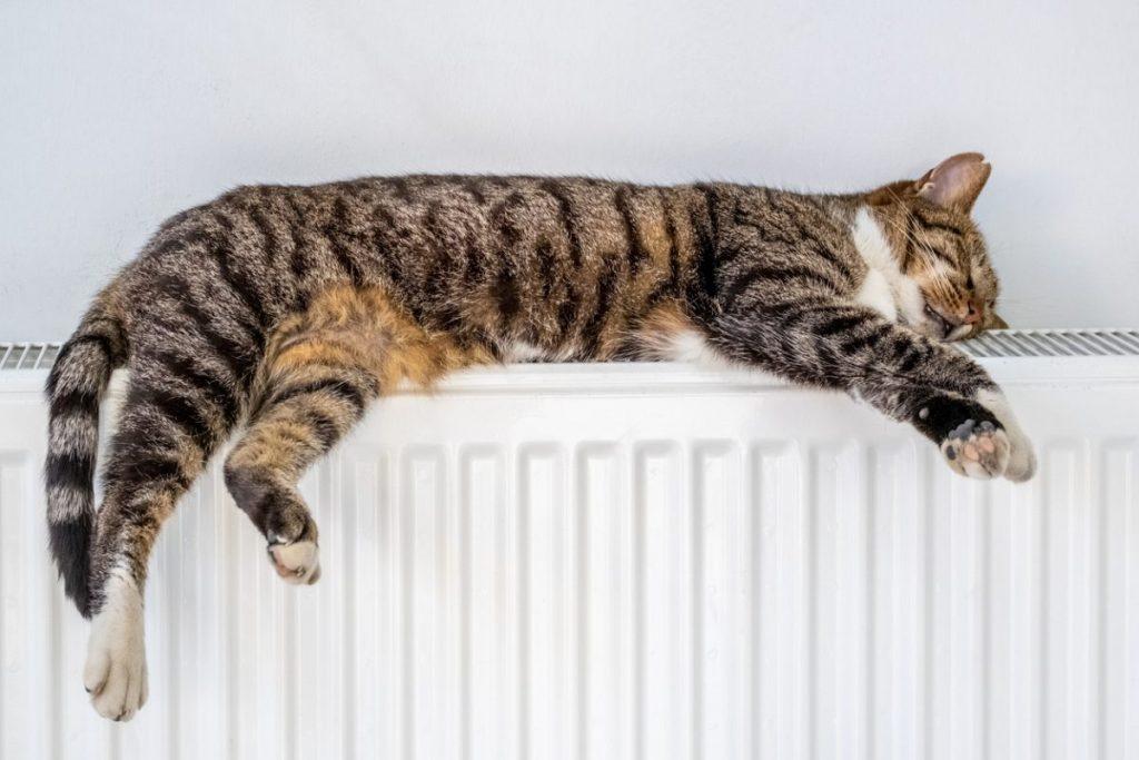 chat sur radiateur electrique