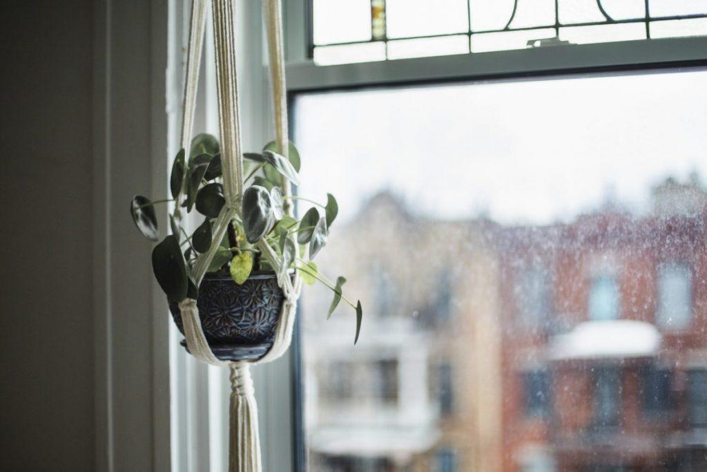 plante-suspendue-deco-boheme