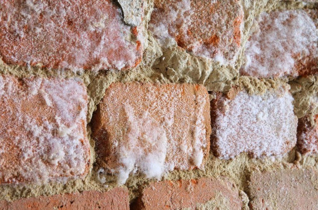 mur-humidité-salpetre