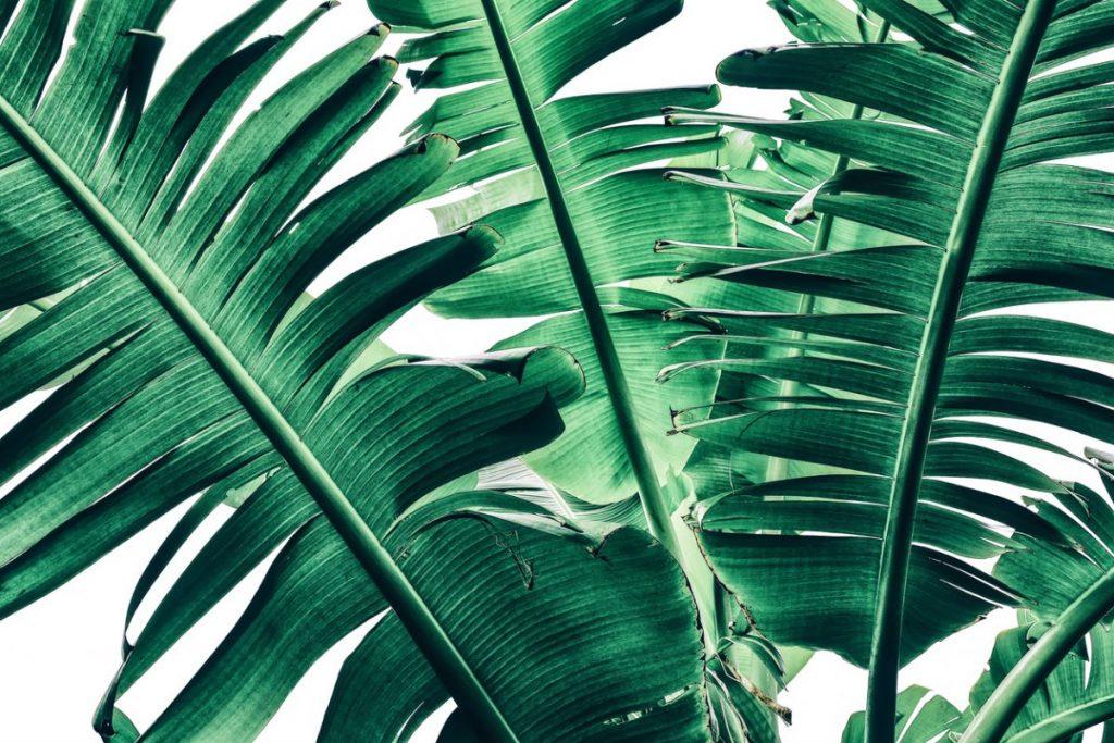 idees-de-renovation-pour-la cuisine-papier-peint-jungle