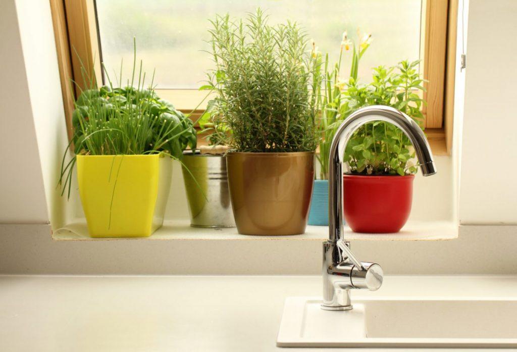 plantes-herbes