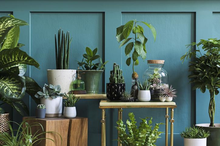 pots-plantes-vertes-d-interieur